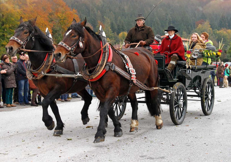 Pferdeherbst in der Ferienregion Hall-Wattens