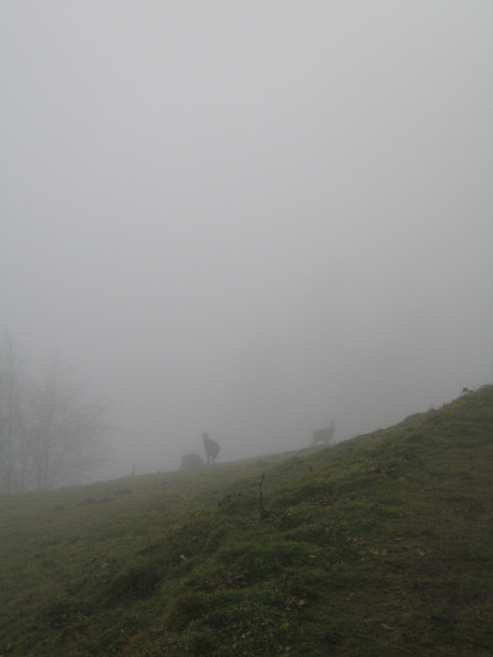 die-wanderbegleiter-heute